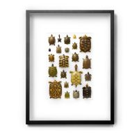 30 x 40 Chelonian Mosaic Turtle