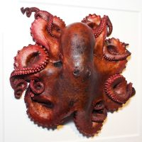 24 x 24 Preserved Octopus 2