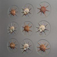 16 x 20 Gilded Starshells Alternate 2