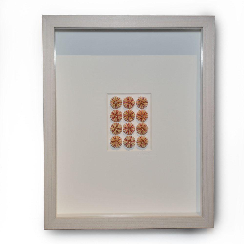 11 x 14 Lilac Urchins