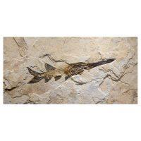 Fossil Mural 02_Q040511002cm