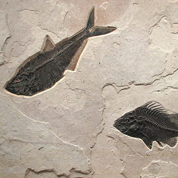 Fossil Mural 02_Q100623023cm