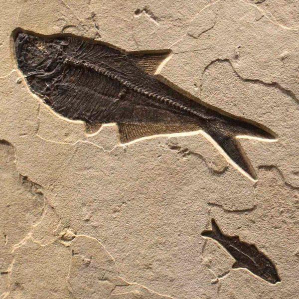 Fossil Mural 02_Q100701012cm
