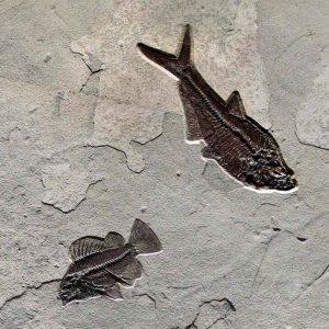 Fossil Mural 02_Q100831010cm
