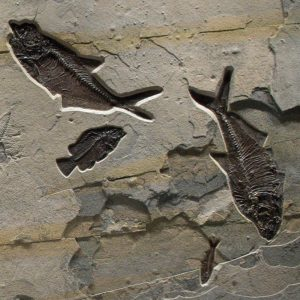Fossil Mural 02_Q100908014gm