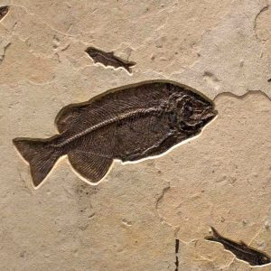 Fossil Mural 02_Q140918002gm