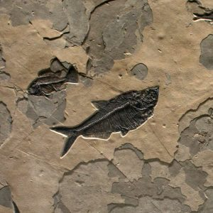 Fossil Mural 02_Q141014003gm