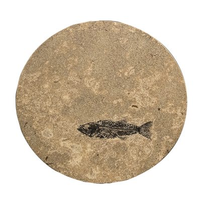 Fossil Stone Drink Table (Round) 170111318t