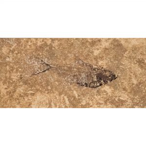 Fossil Tile (Honed) DR48_H109