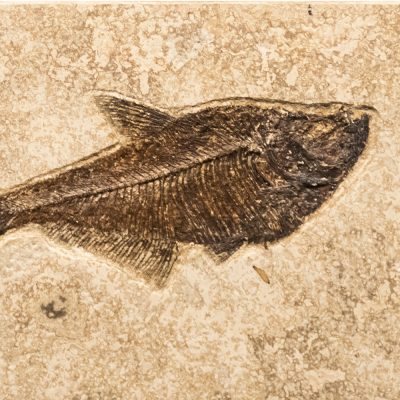 Fossil Tile (Combination) DR48_S202