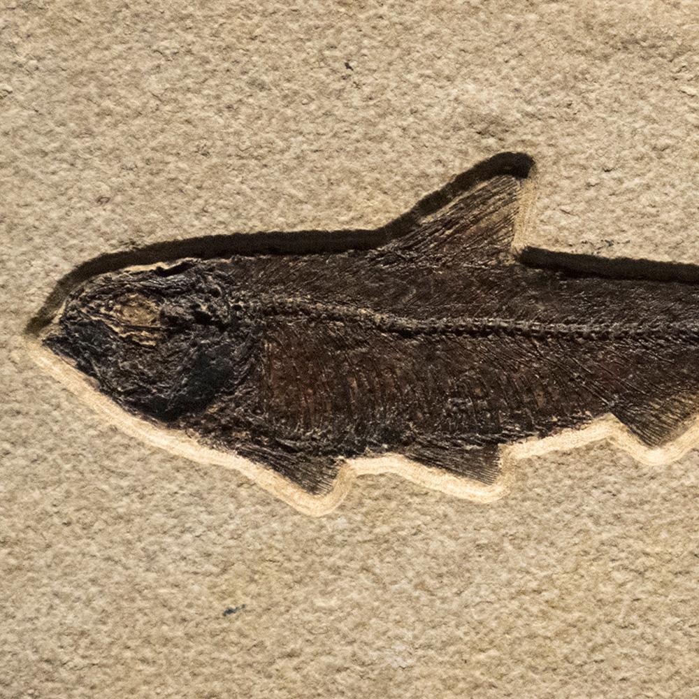Fossil Tile (Natural) KL48_N135