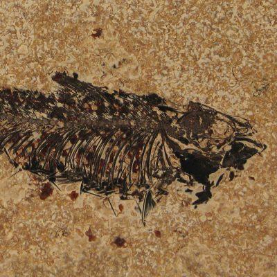 Fossil Tile (Honed) KR48_H080