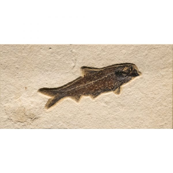 Fossil Tile (Natural) KR48_N210