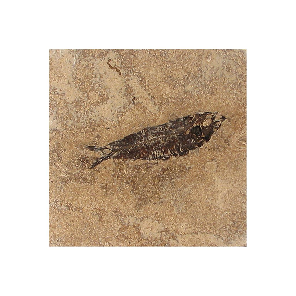 Fossil Tile (Honed) KR66_H126