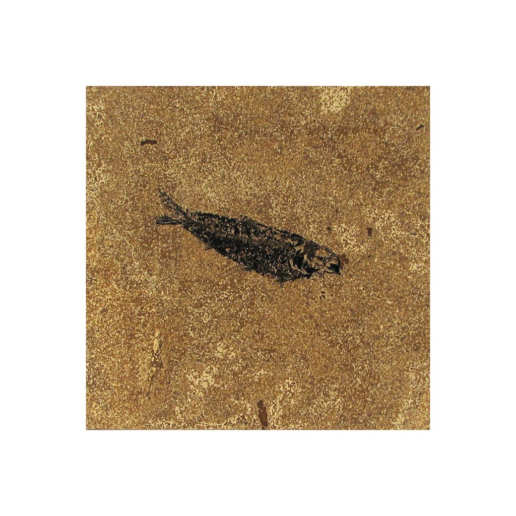 Fossil Tile (Honed) KR88_H068