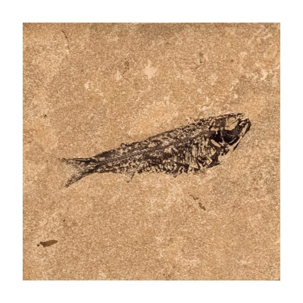 Fossil Tile (Honed) KR88_H105