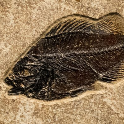 Fossil Tile (Combination) PL88_S233
