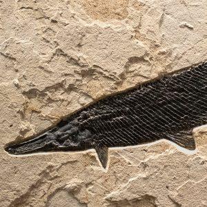 Fossil Mural 02_Q170710001am