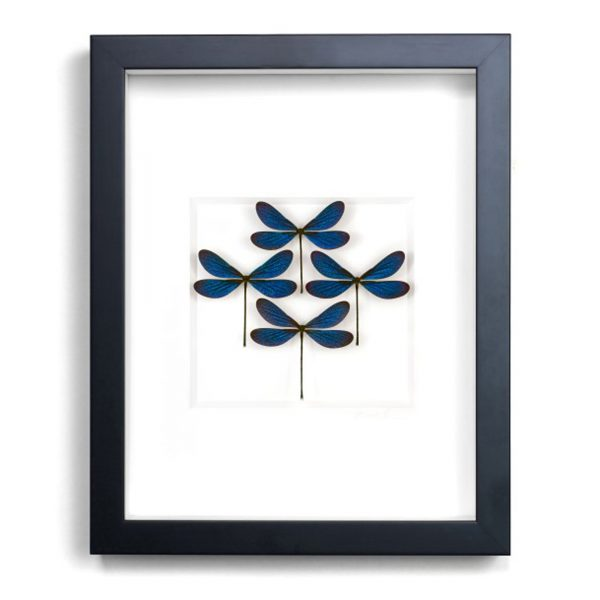 11 x 14 Azure Damselfly Diamond