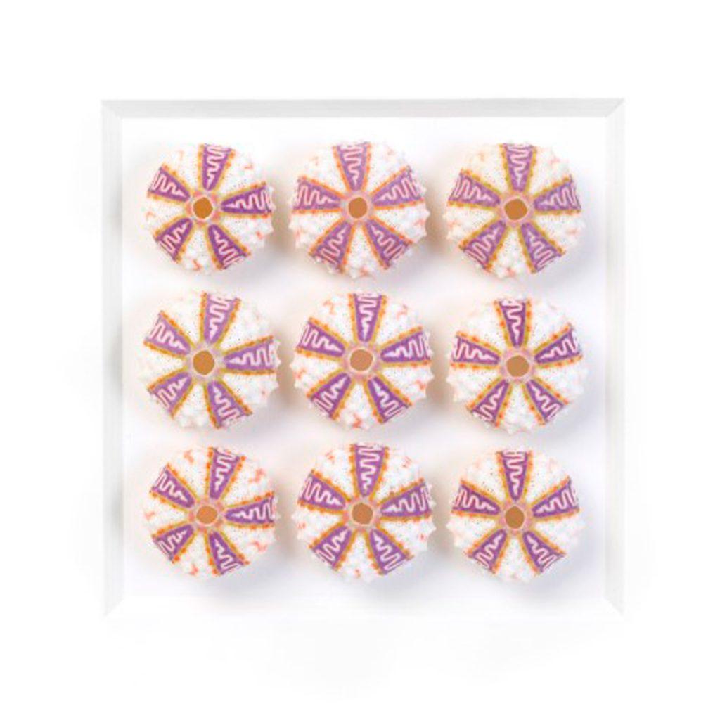 11 x 14 Exquisite Urchins
