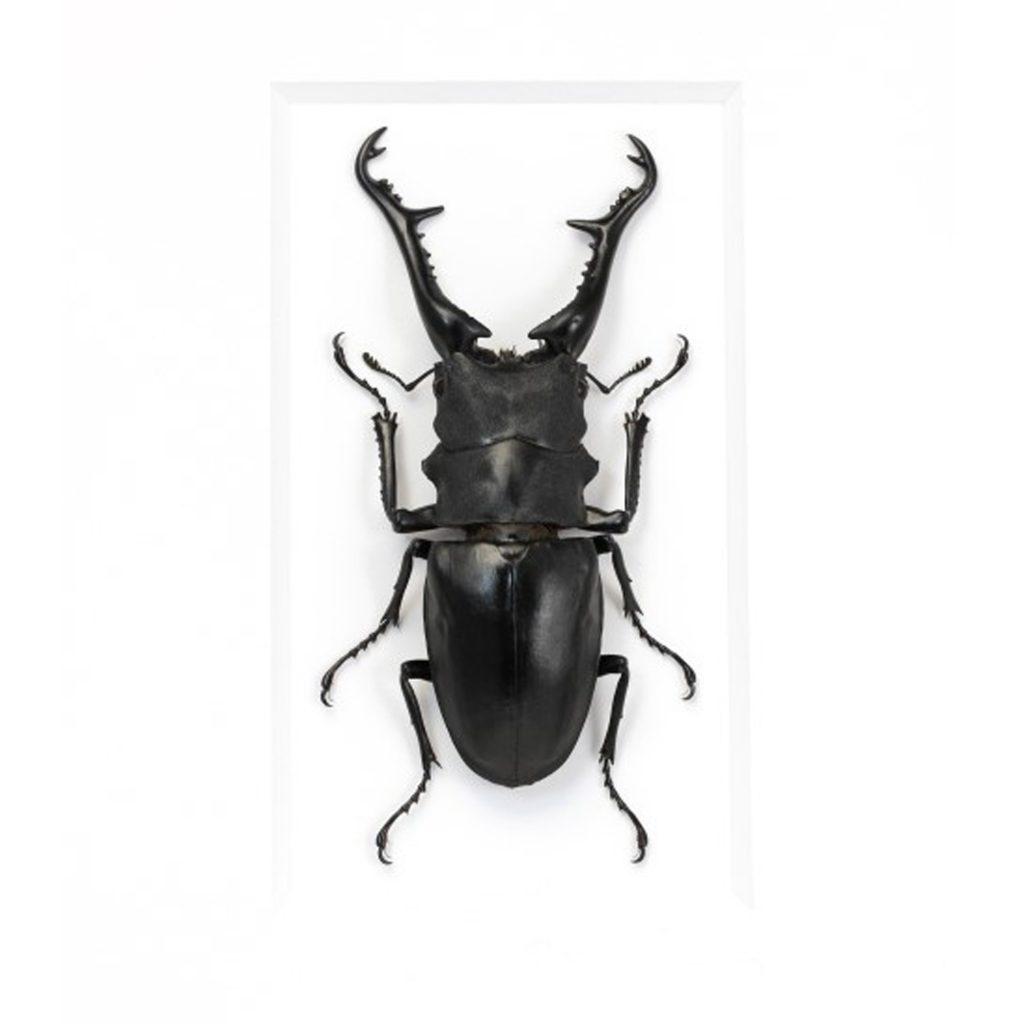 11 x 14 Giraffe Stag Beetle
