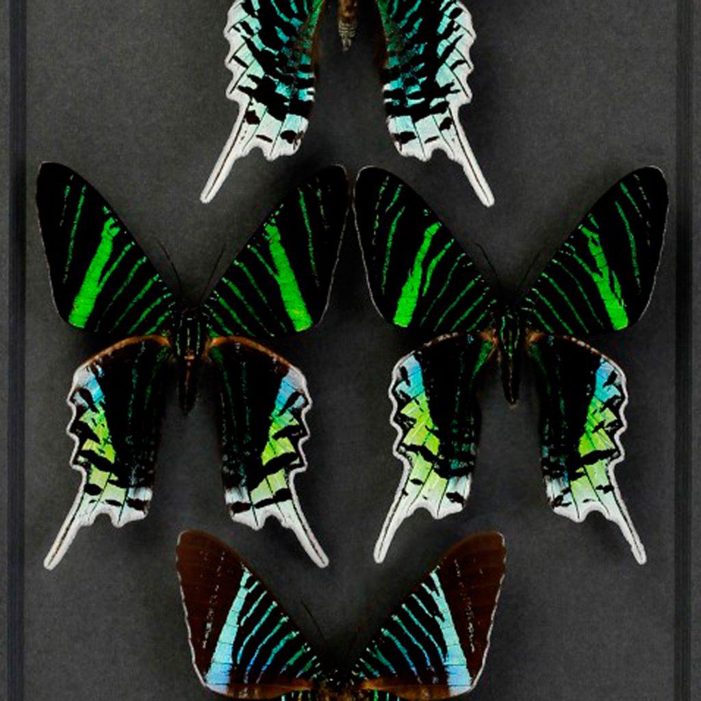 20x 24 Dayflying Moths 2024 on Graphite