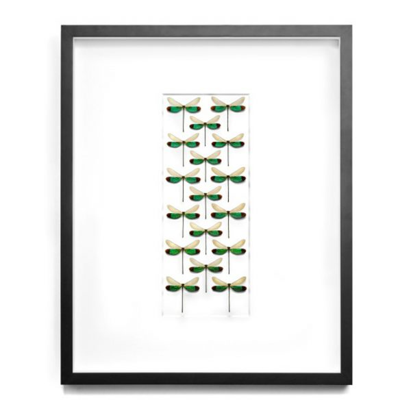 24 x 30 Emerald Damselfly Drift
