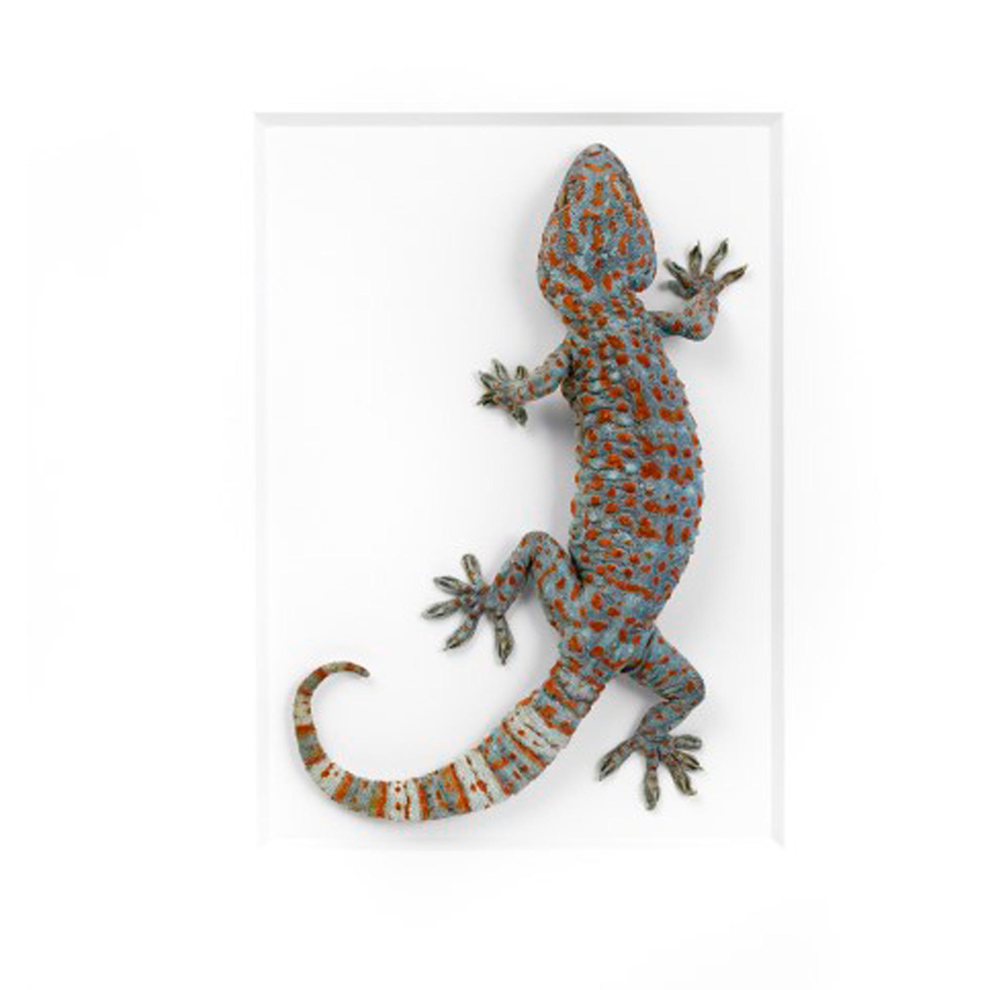 11 x 14 tokay gecko house of whitley