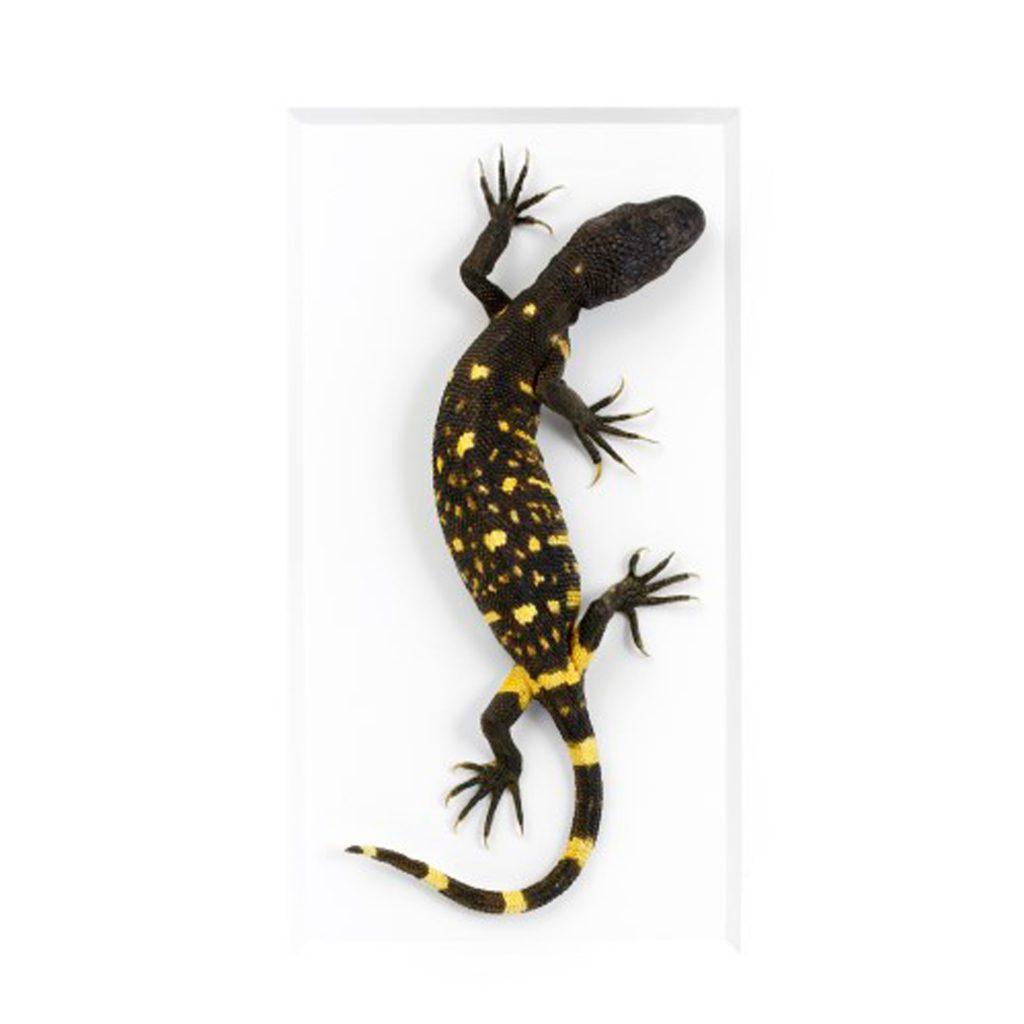 11 x 14 Beaded Lizard