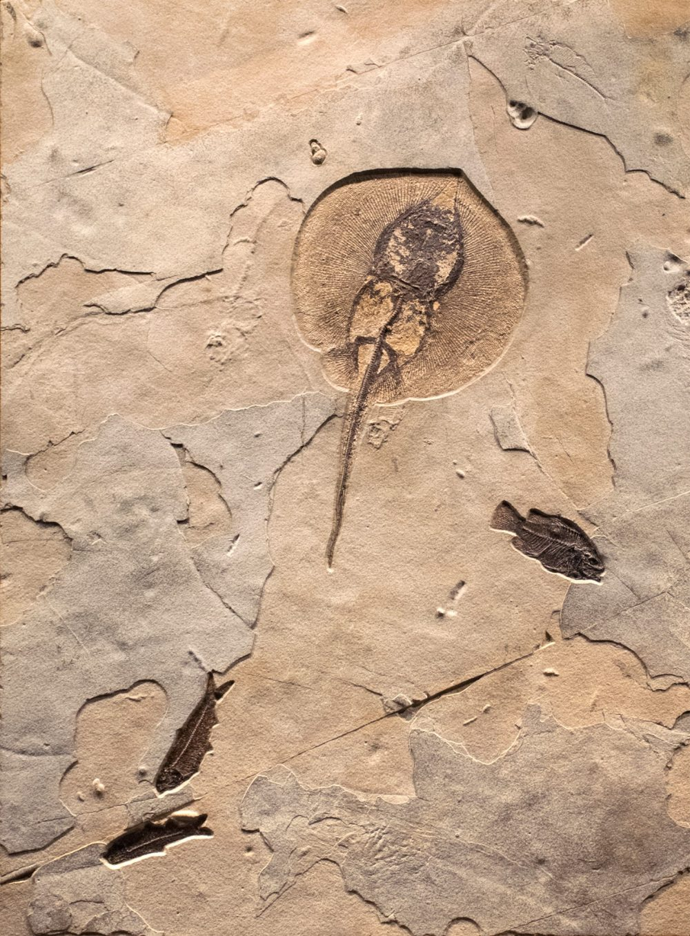 Fossil Collector Mural 02_MS170918500AM