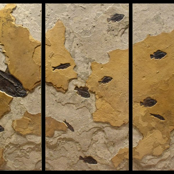 Fossil Collector Mural 02_Q171004001ABC
